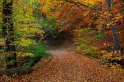 Есен на Панагюрски колонии