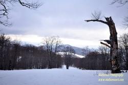 ски пистата на хотел Кокалско